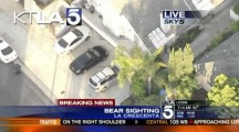 Guy Texting on Cellular Phone Almost Runs Into Stray Bear in La Crescenta California