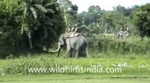 Tiger attacks Man on Elephant in India