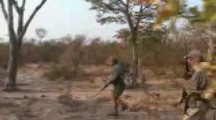Lion shot by Safari Hunter during attack